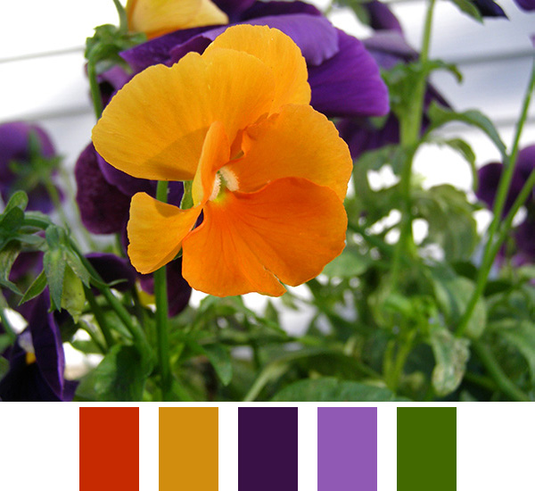 Orange and Purple Color Scheme