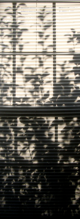 Tree Shadow on Window