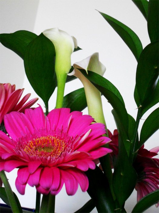 Calla lilies and pink daisy by Cortney North