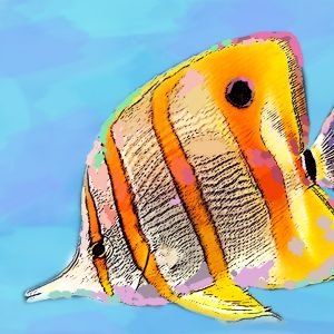 Copper banded Butterfly Fish sketch by Cortney North