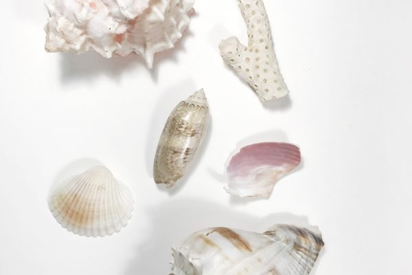 Seashells by the sea shore